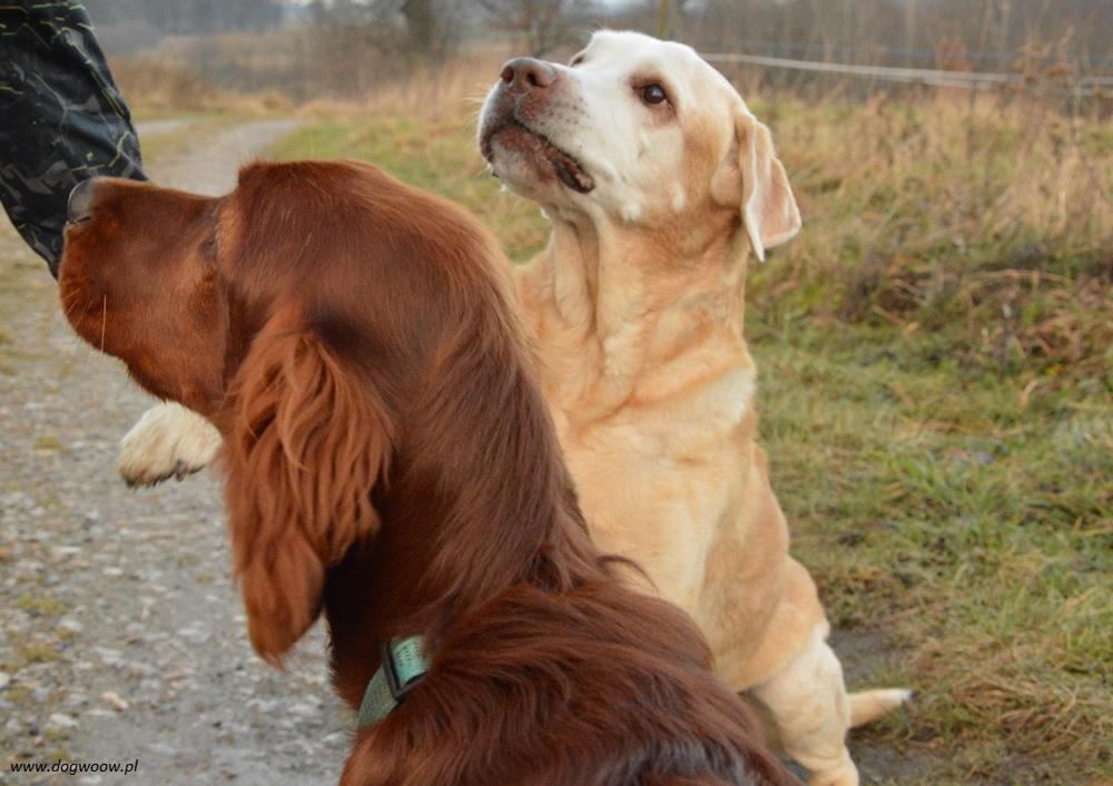 skupienie-całym-psem